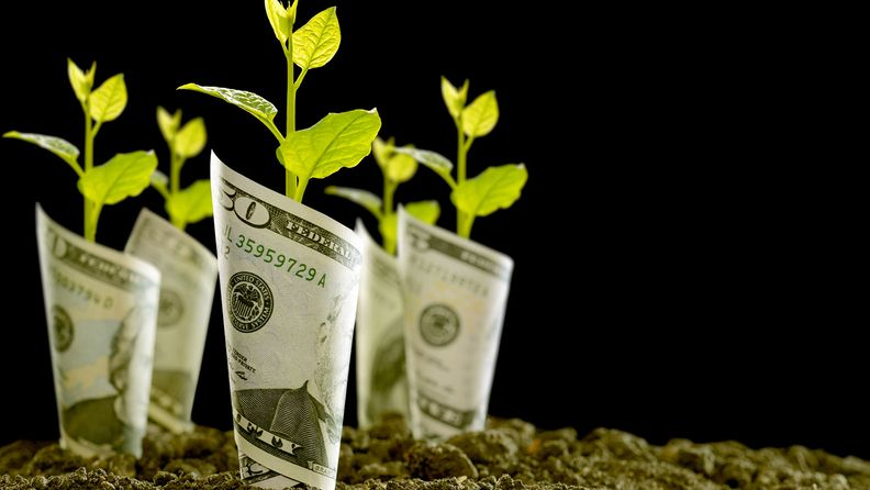 Image of bank notes rolled around plants on soil for business, saving, growth, economic concept on black background