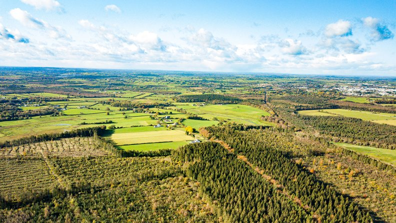 Irish forest